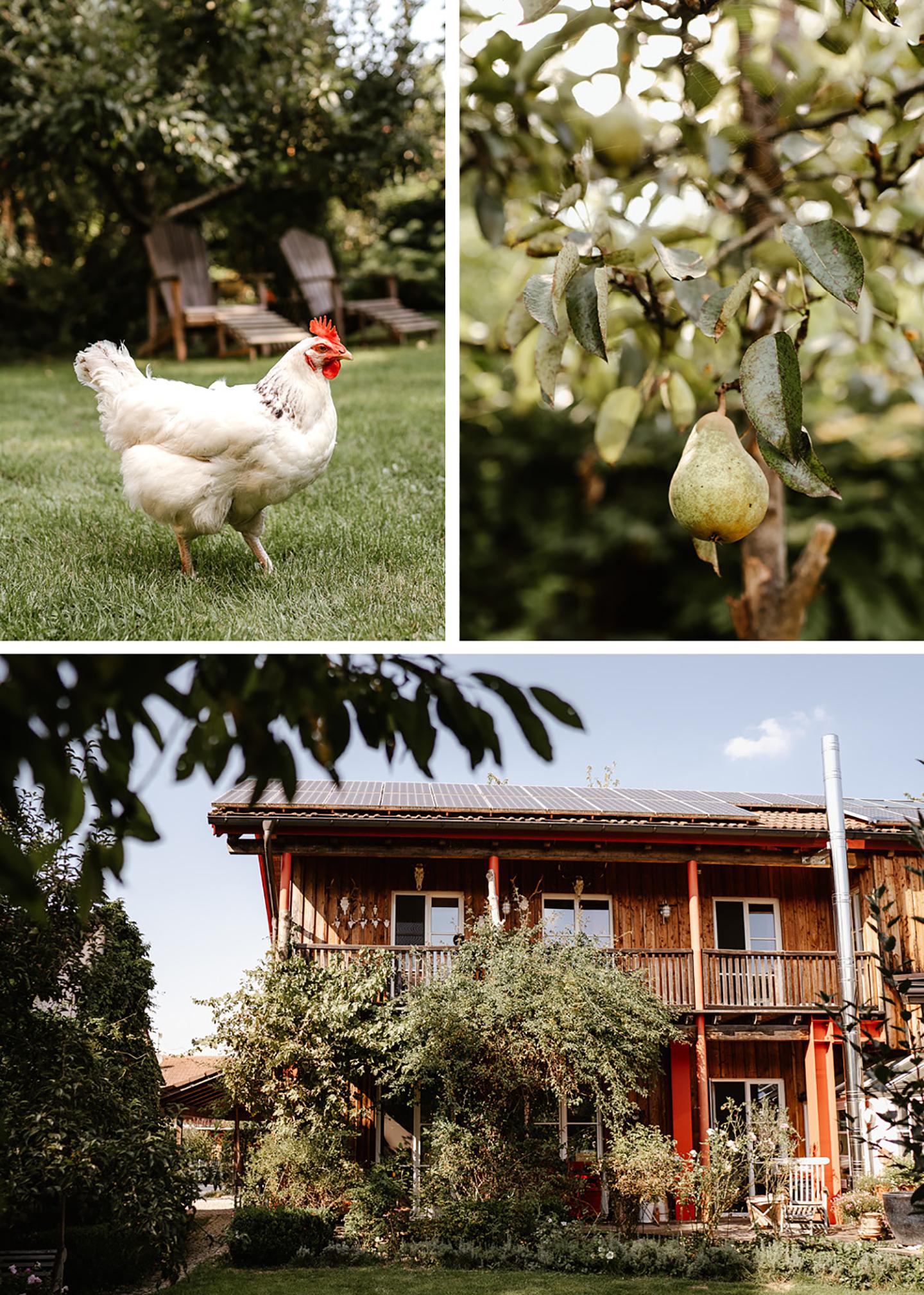 Das Haus auf dem Grundstück, ein Huhn sowie ein Birnenbaum werden gezeigt.